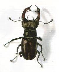 La biodiversit r gne sur le terril - Insecte vert volant ...